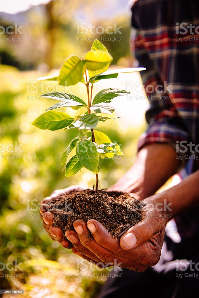 Hands carrying a sapling and fresh new earth stock photo