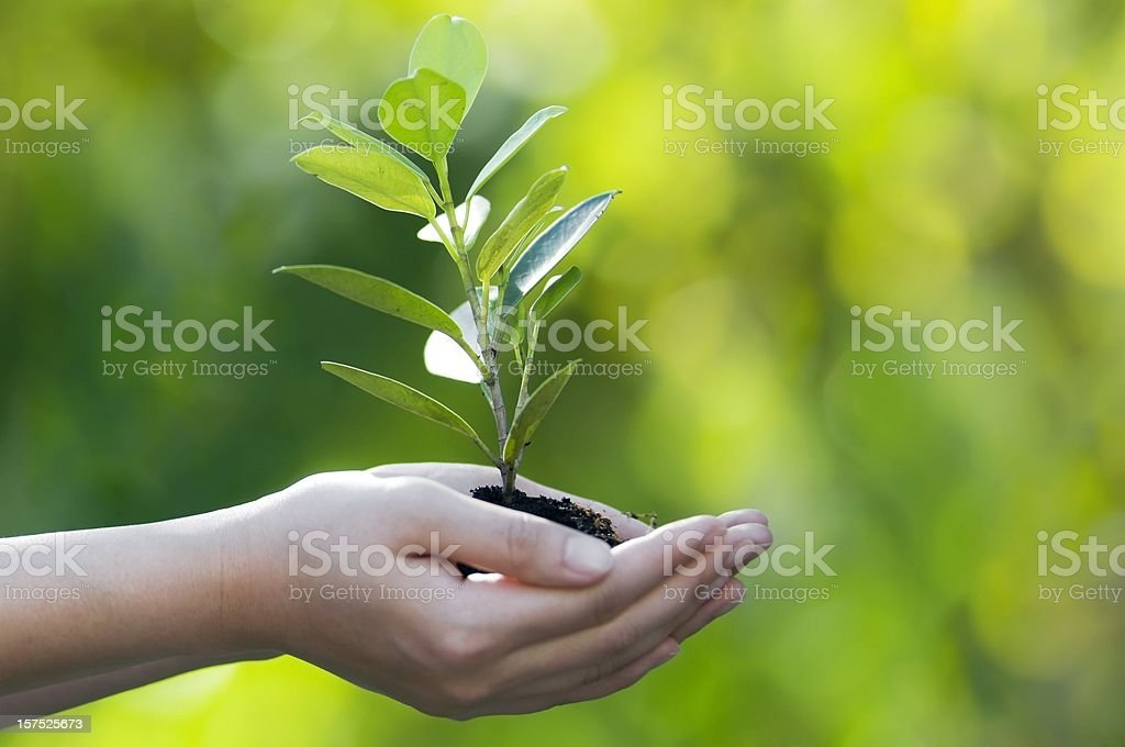 Hands cupped together holding a sprouting tree on bokeh back stock photo