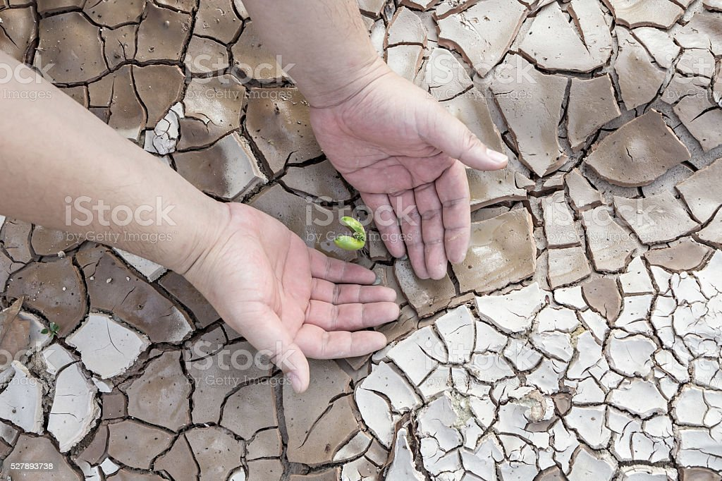 Hands defending green tree sprout on cracked ground, conservation concept stock photo