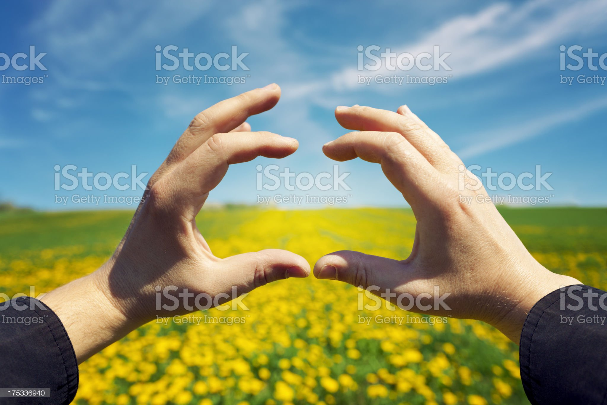 Hands forming a frame over a yellow-flowered field royalty-free stock photo
