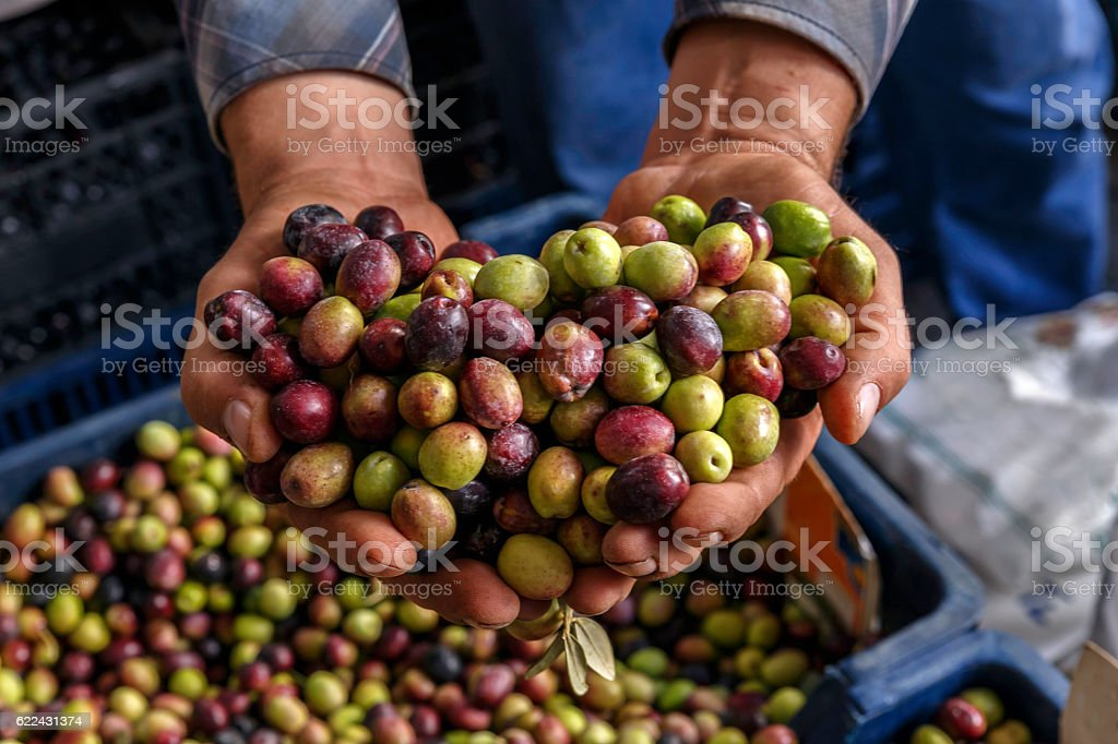hands full mix olives stock photo