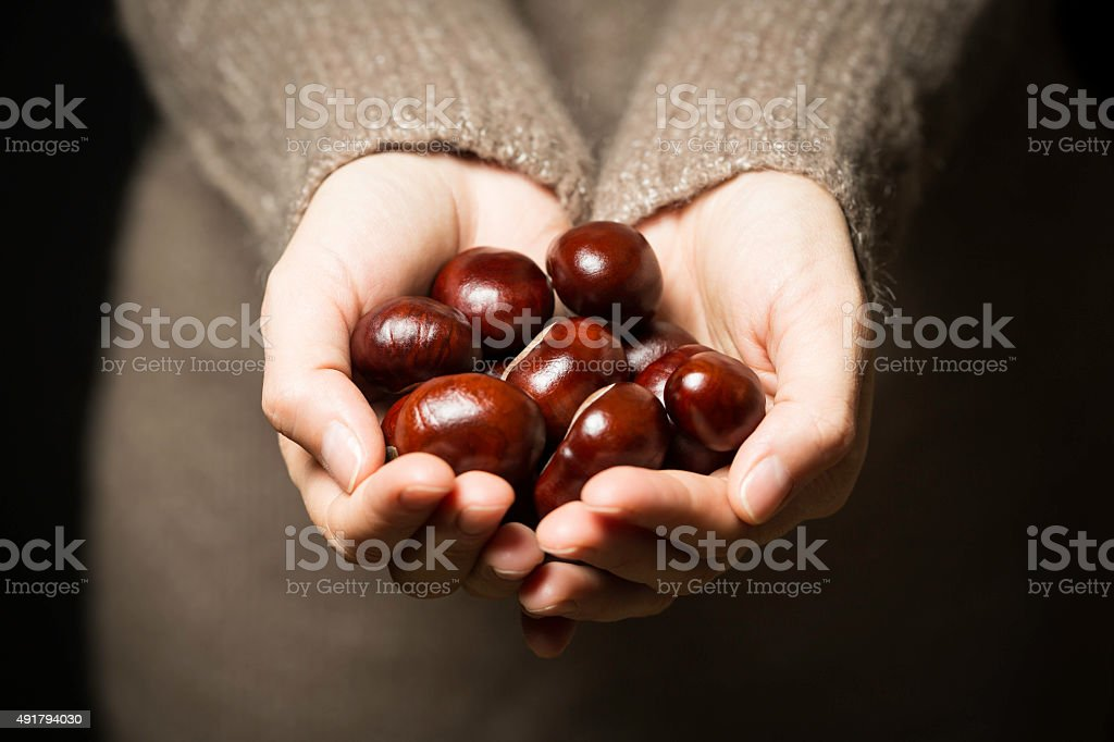 hands full of chestnuts stock photo