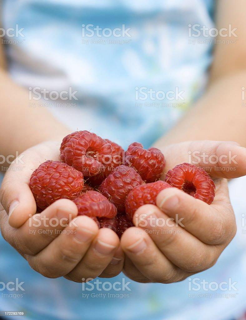 Hands full of raspberries royalty-free stock photo