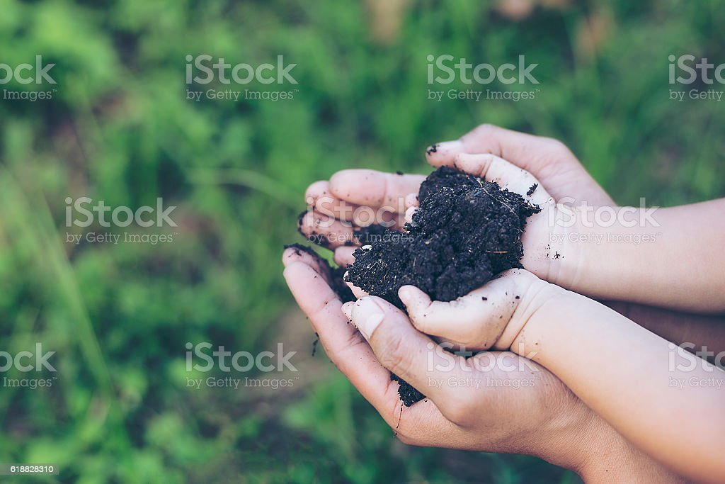 Hands growing a young plant / protect nature and environment stock photo