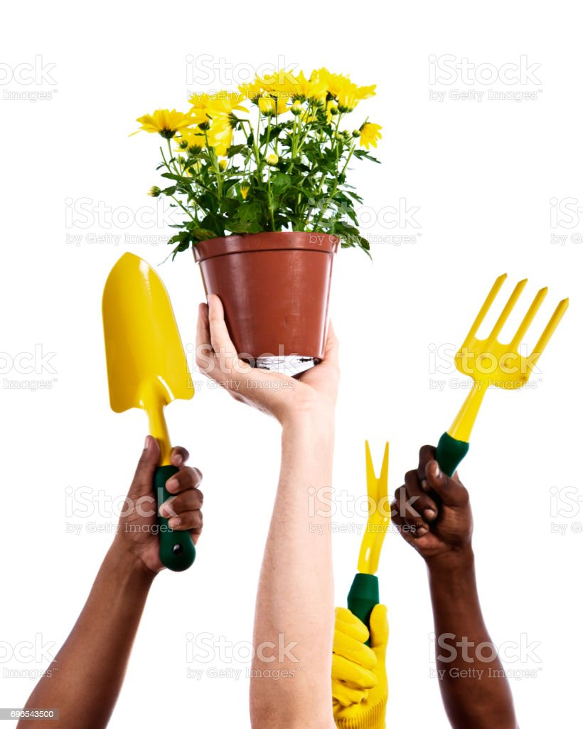 Hands hold aloft potplant and variety of garden tools stock photo