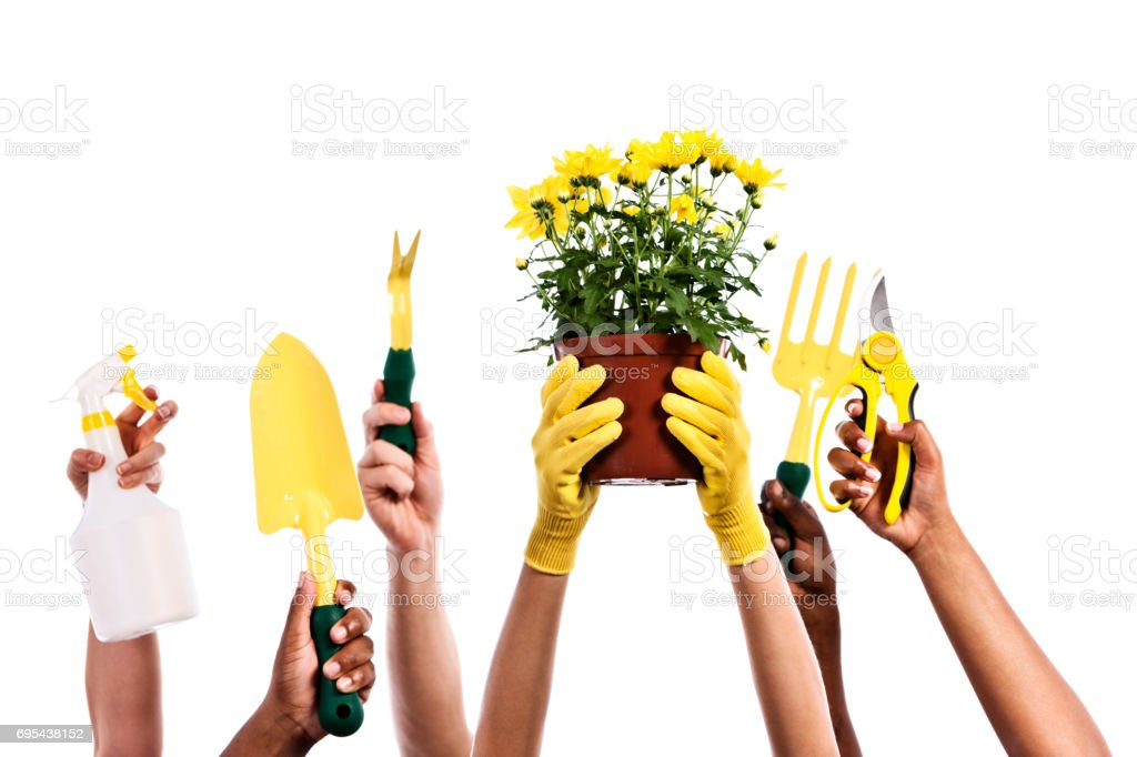 Hands hold up gardening tools and plant, ready to work stock photo