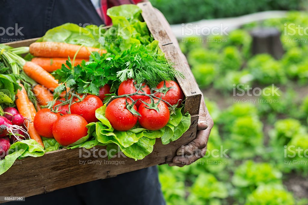 Hands holding a grate full of fresh vegetables stock photo