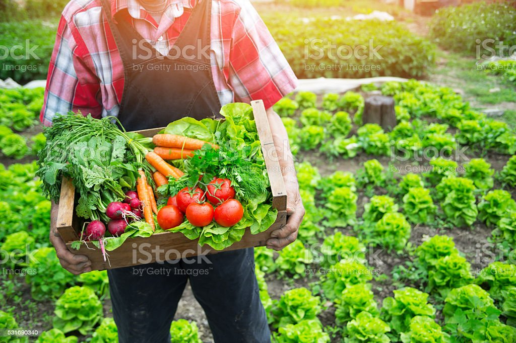 Hands holding a grate full of raw vegetables stock photo