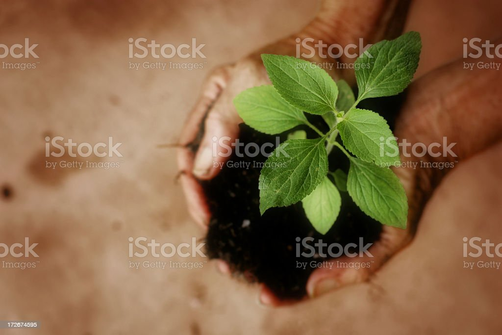 Hands holding a mound of dirt with a green plant growing royalty-free stock photo