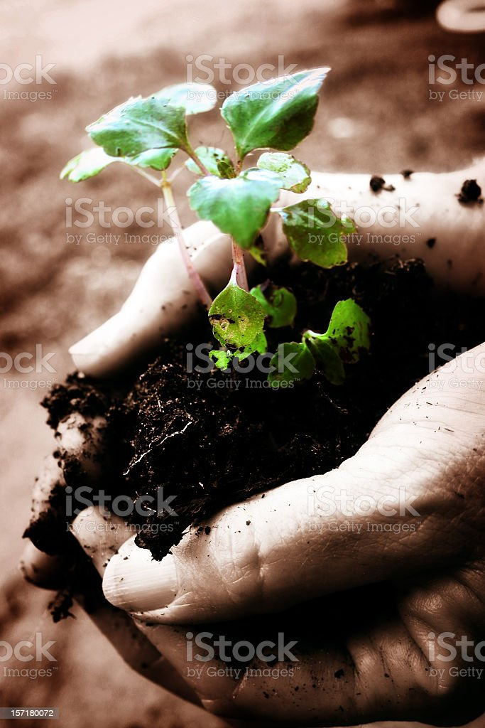 Hands holding a plant in soil to planted royalty-free stock photo