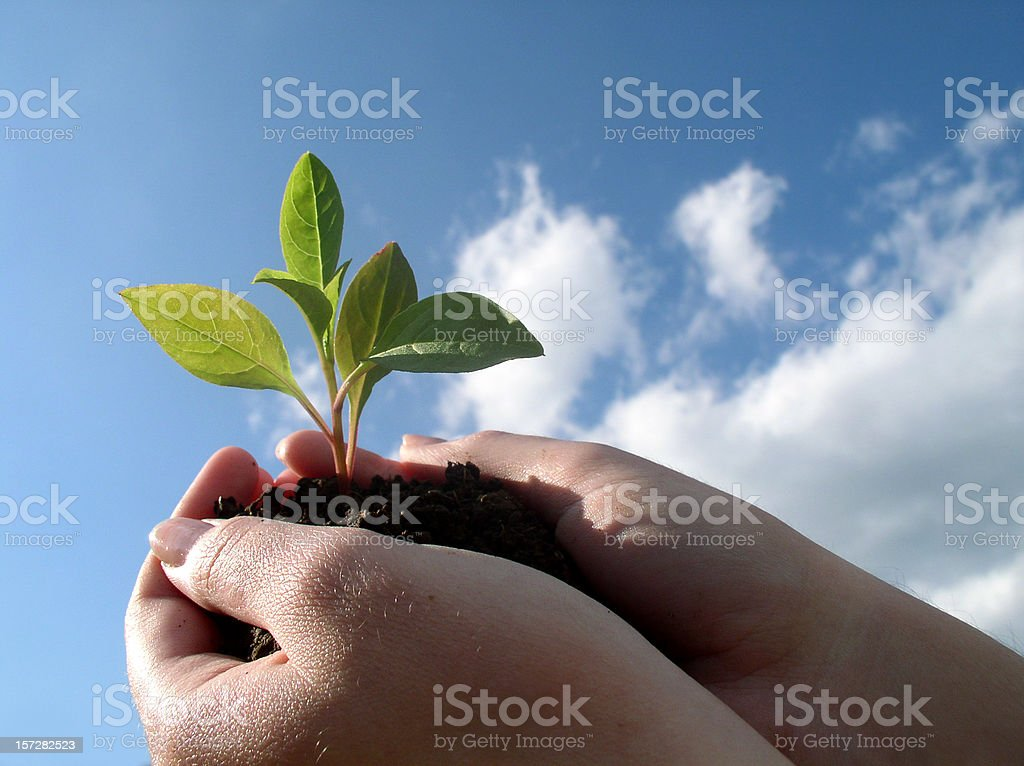 Hands holding a Plant royalty-free stock photo
