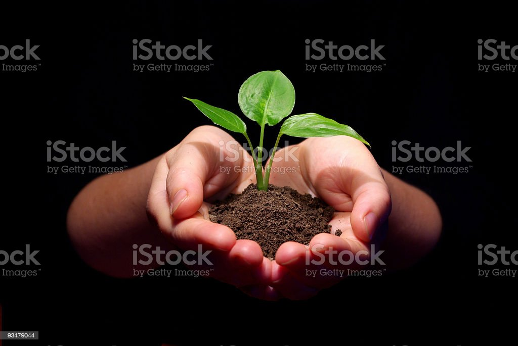 Hands holding a sapling in soil with a black background royalty-free stock photo