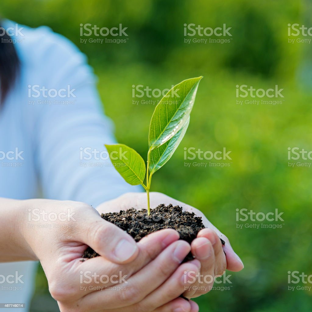Hands holding a small plant on soil ground stock photo
