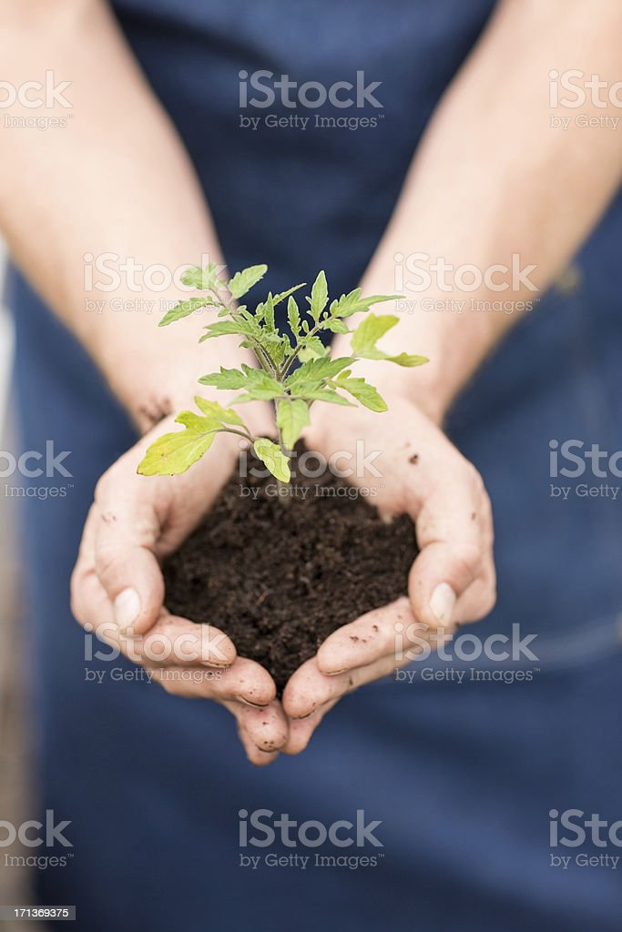 Hands Holding a Small Plant royalty-free stock photo