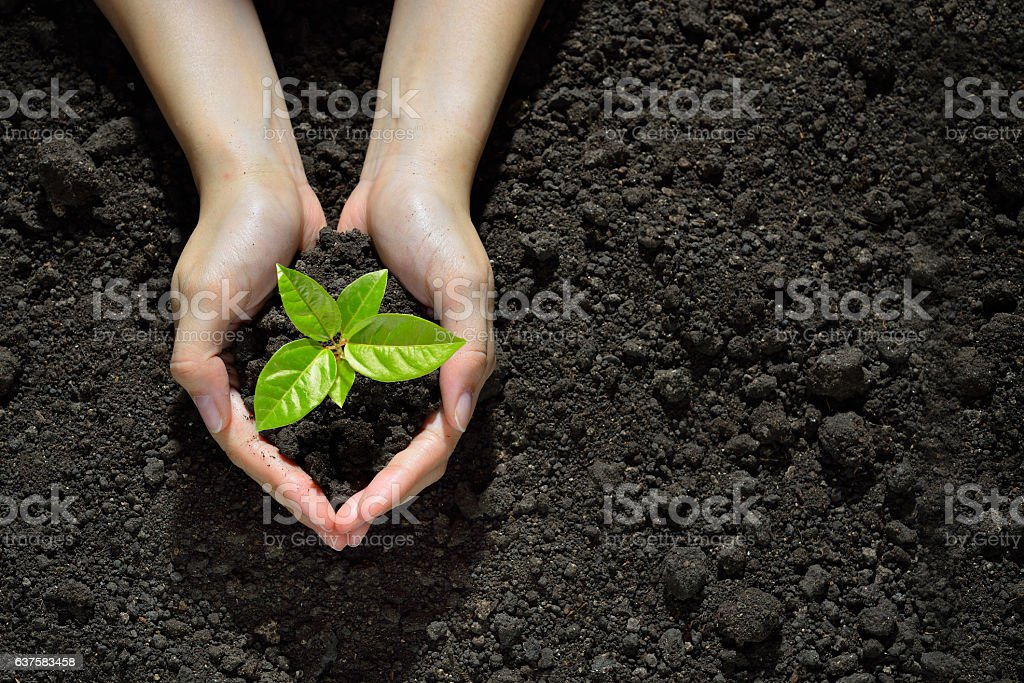 Hands holding and caring a green young plant stock photo
