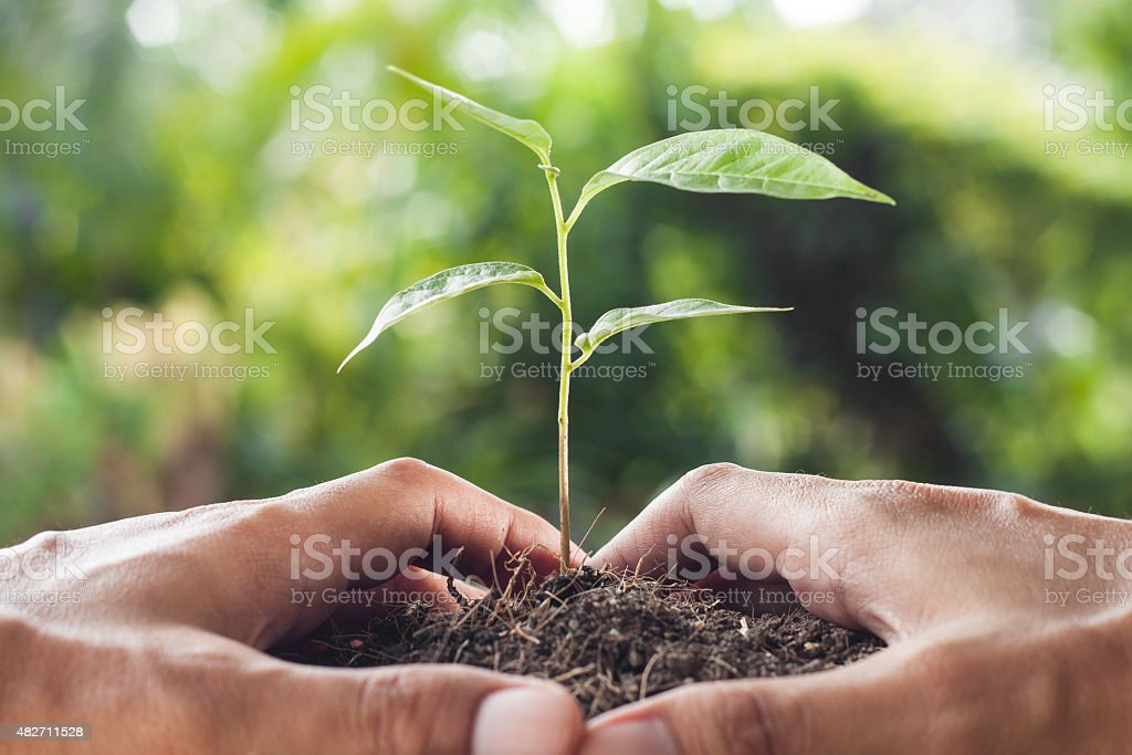 hands holding and caring a young plant stock photo