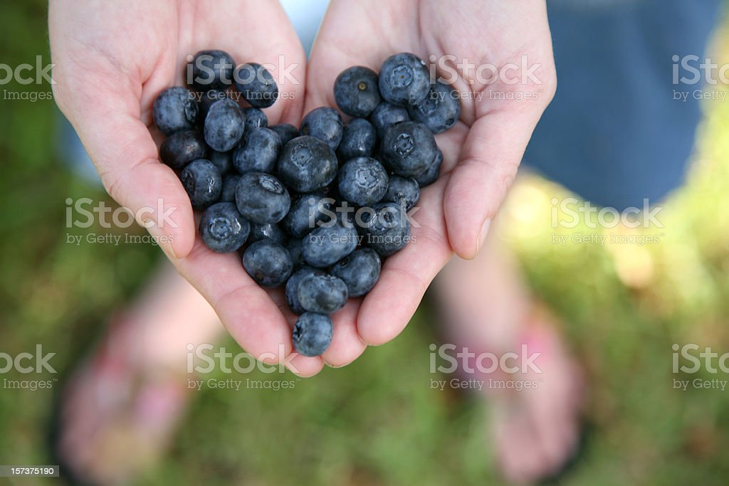 Hands Holding Blueberries In The Shape Of A Heart royalty-free stock photo