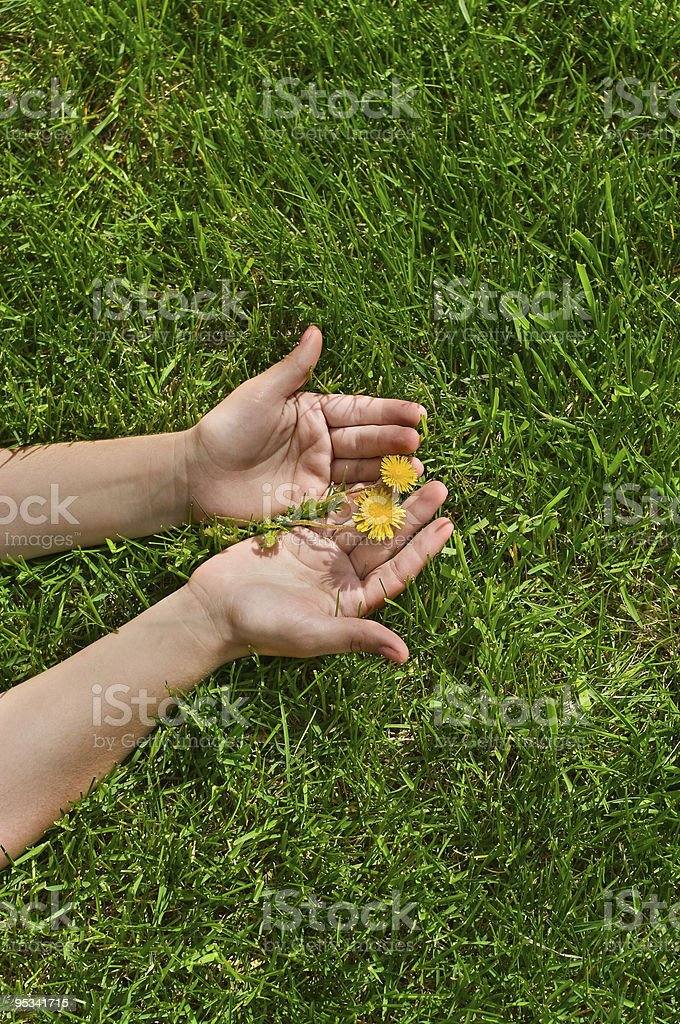 Hands holding flower royalty-free stock photo