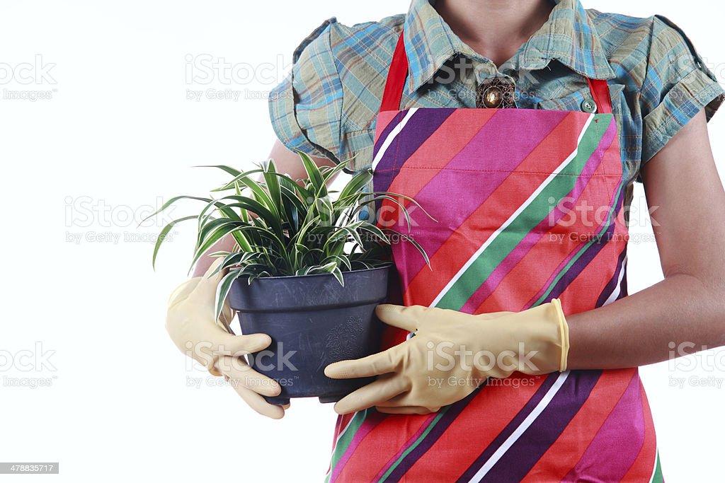 Hände holding flowerpot, isoliert auf weißem Hintergrund Lizenzfreies stock-foto