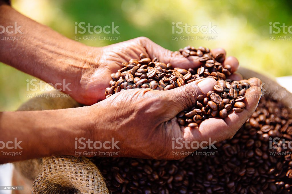 Hands holding freshly roasted aromatic coffee beans stock photo