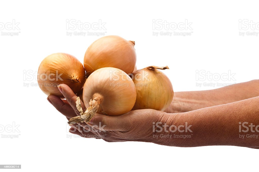 Hands holding gold onions stock photo