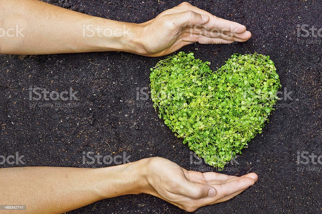 hands holding green heart shaped tree stock photo