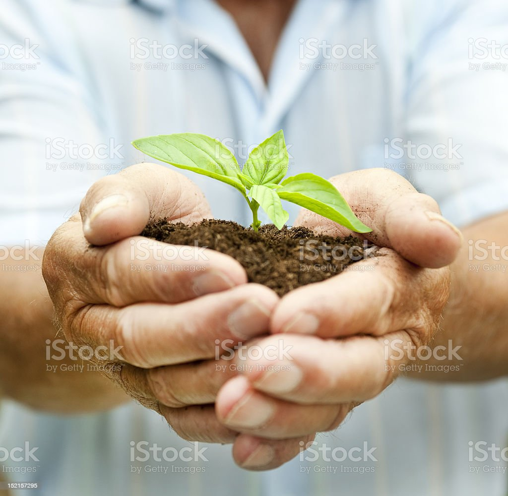 Hands holding New Green Shoot royalty-free stock photo