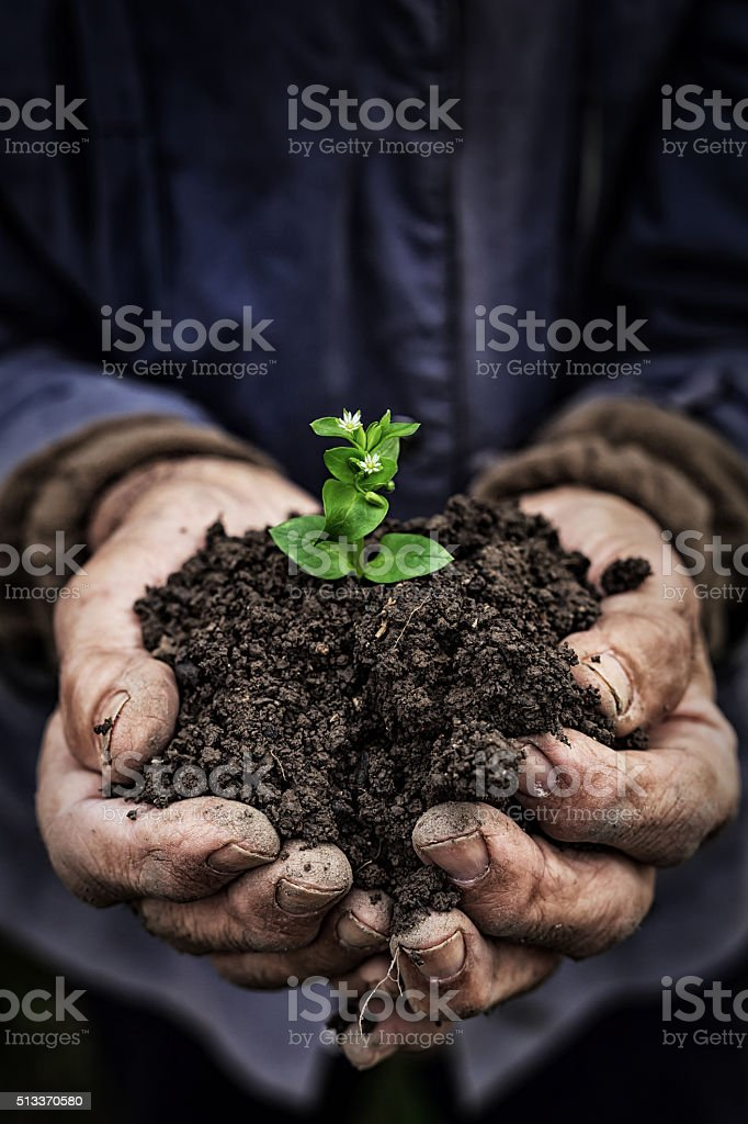 Hands holding new growth-close up stock photo