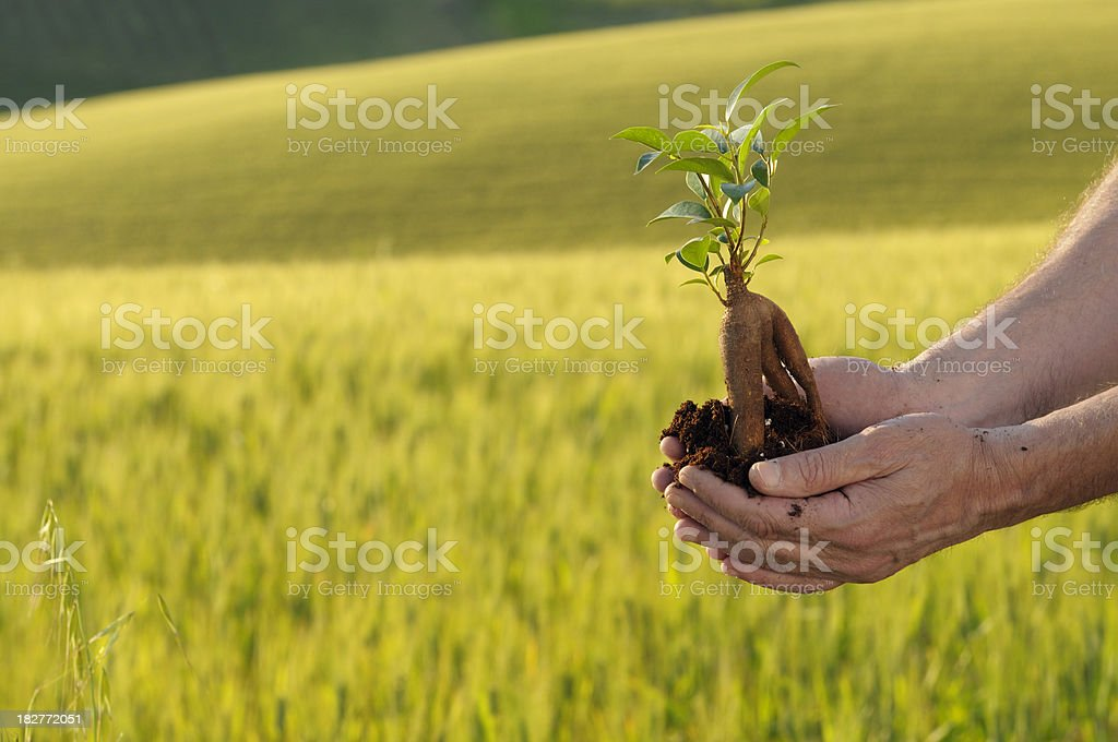 Hands Holding New Life royalty-free stock photo