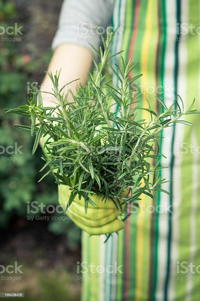 Hands holding plant royalty-free stock photo