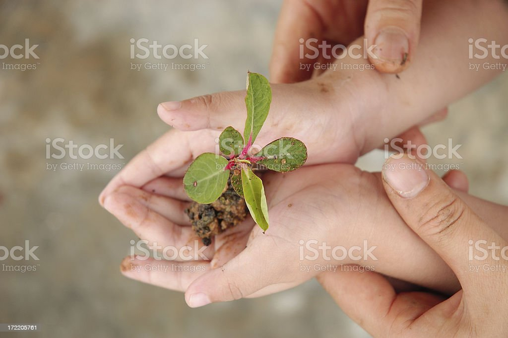 Hands Holding Plant stock photo