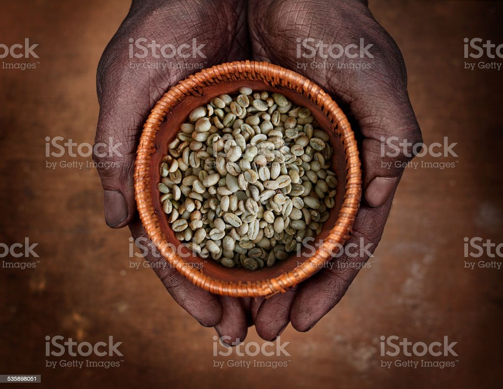 Hands holding raw (green) beans of ethiopian coffee stock photo