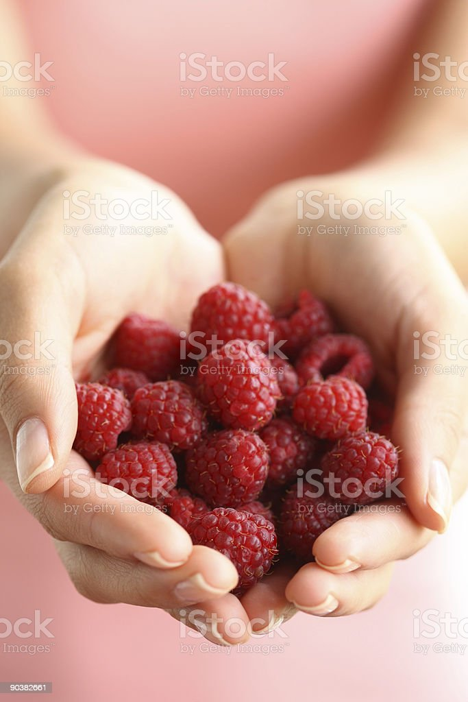 Hands holding red raspberries royalty-free stock photo