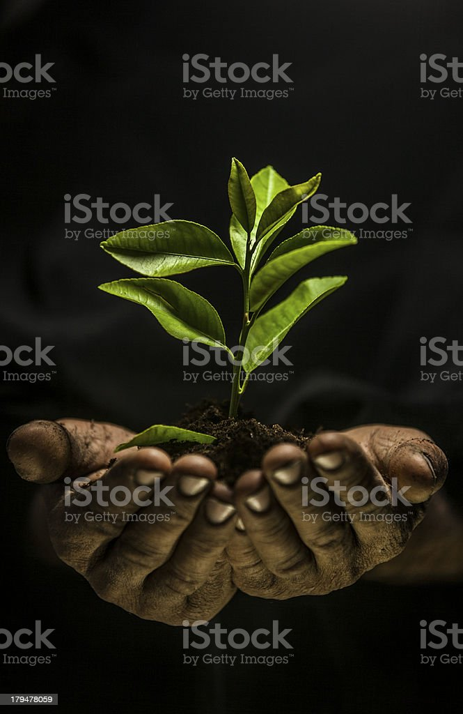 Hands holding sapling in soil royalty-free stock photo