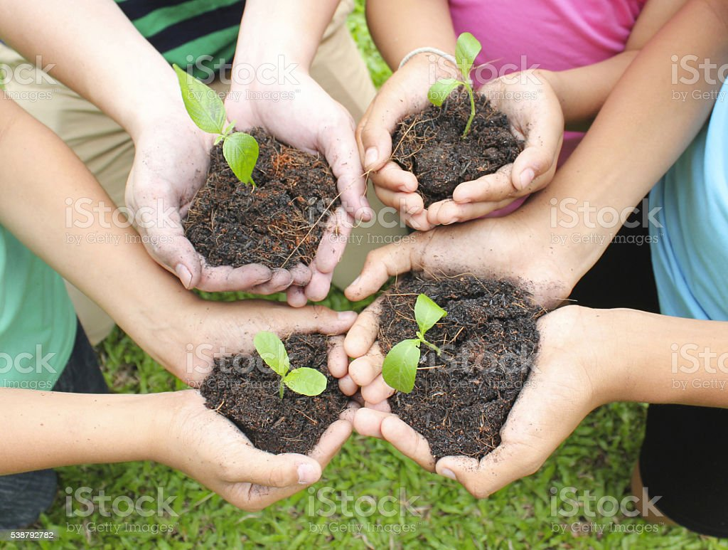 Hands holding sapling in soil surface stock photo