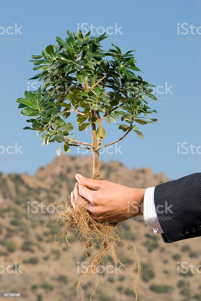 hands holding sapling royalty-free stock photo