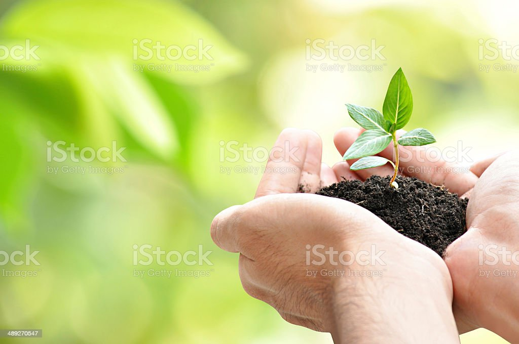 Hands holding seedling with soil on green bokeh blackground stock photo
