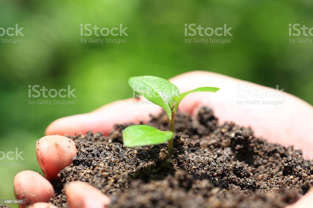 Hands holding seedlings royalty-free stock photo