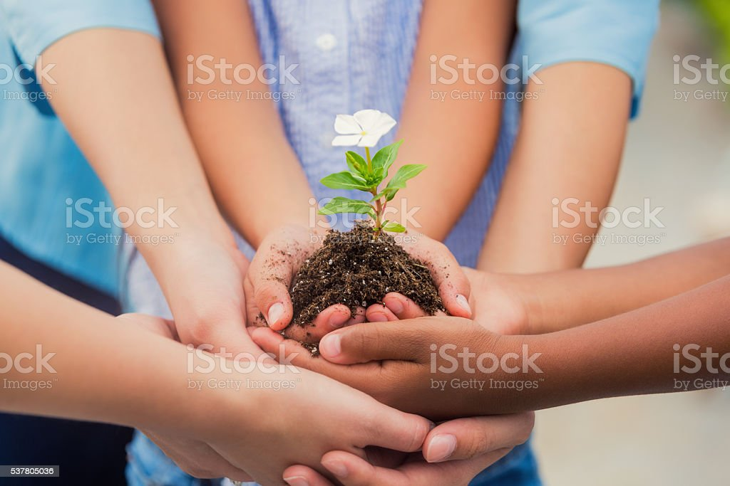 Hands holding small white flower in dirt stock photo