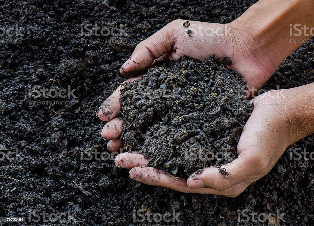 Hands holding soil stock photo