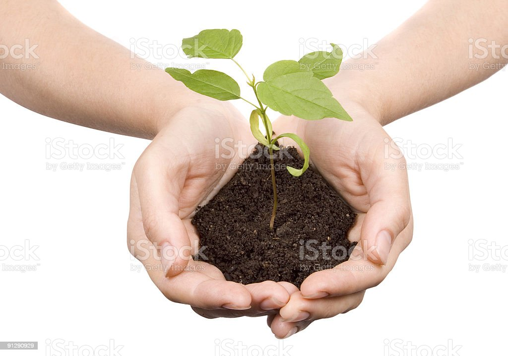 Hands holding soil with small plant growing in it royalty-free stock photo