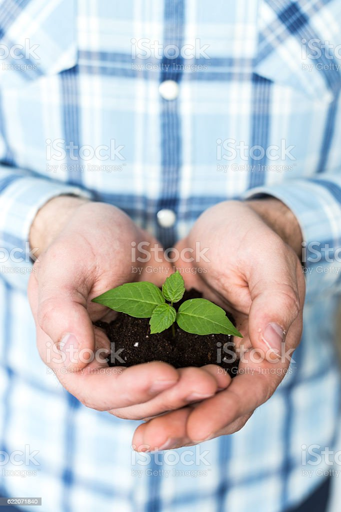 Hands holding sprout in soil surface stock photo