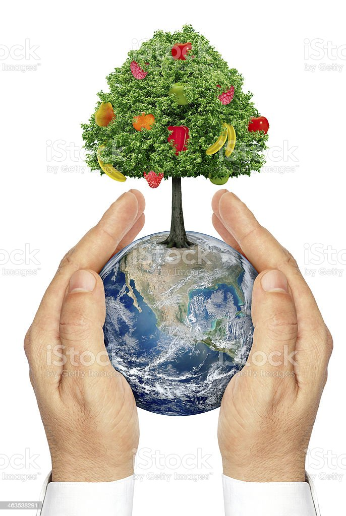 Hands holding the planet Earth with a tree and fruit. stock photo