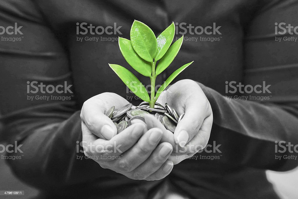 hands holding tree growing on coins stock photo