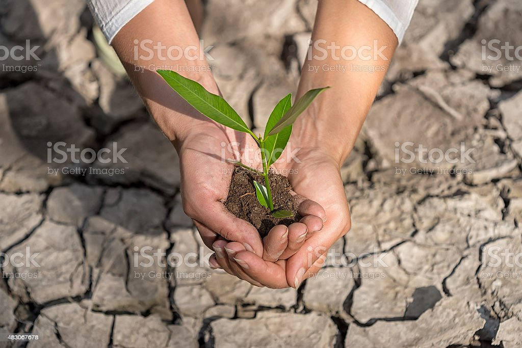 hands holding tree growing on cracked earth stock photo