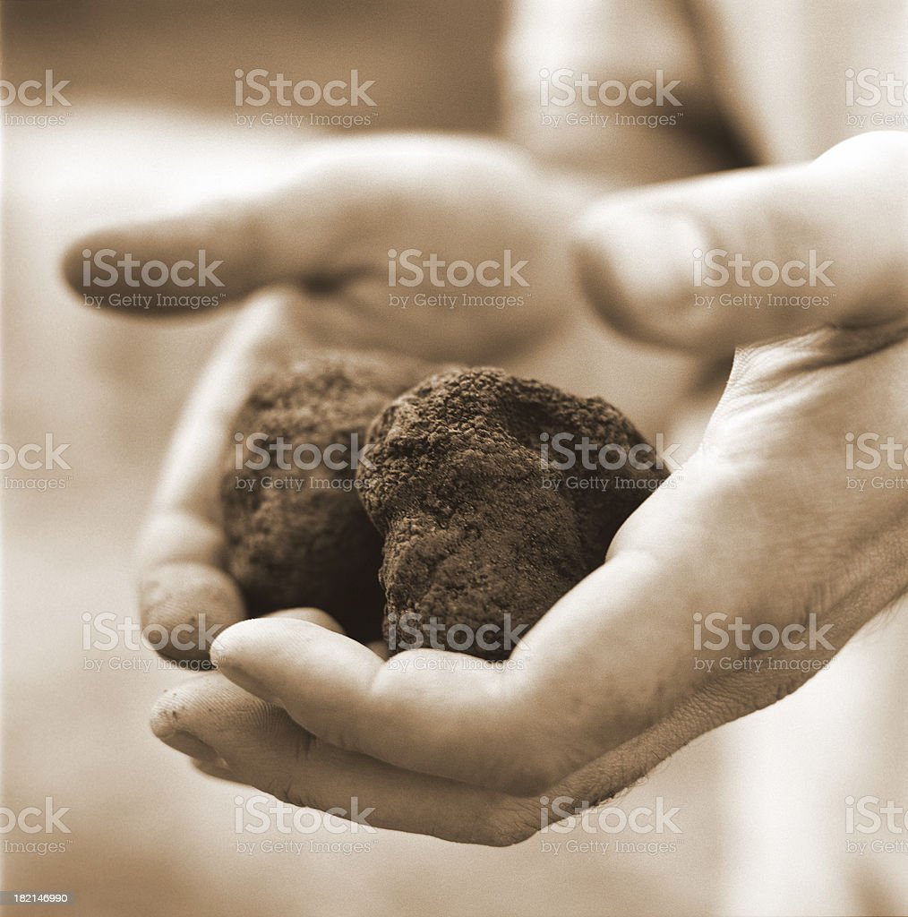 hands holding truffles royalty-free stock photo