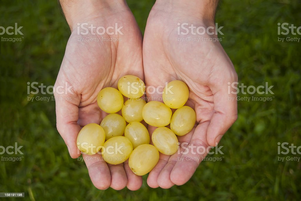 Hands holding twelve grapes stock photo