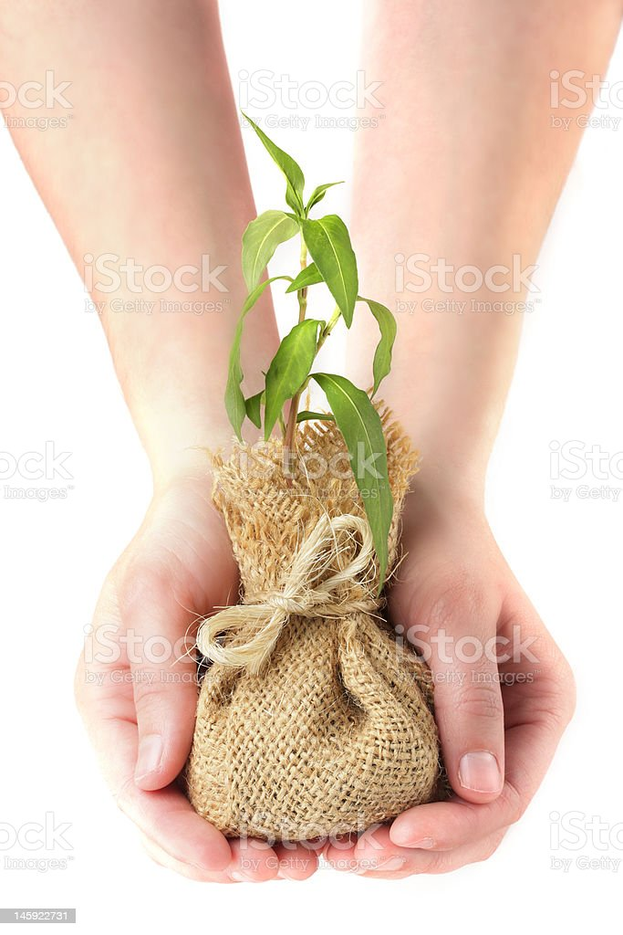 Hands holding young plant royalty-free stock photo