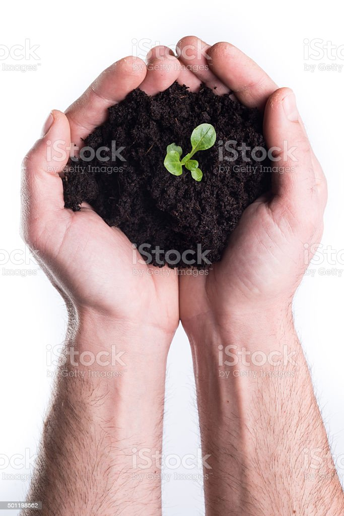 Hands holds topsoil with plant stock photo