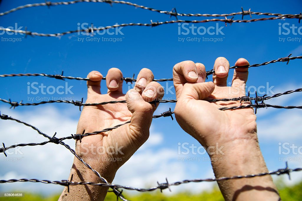 Hands in barbed wire stock photo